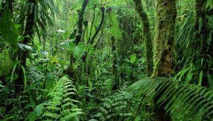 Tipos de Bosques, Características Generales Y Más