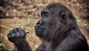 Animales Omnívoros, Sus Características Y Ejemplos