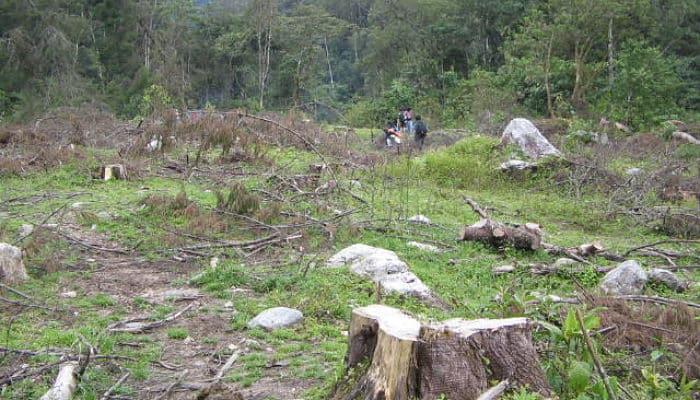 Resultado de imagen de deforestacion en guatemala