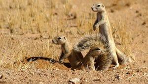 animales comunes del desierto