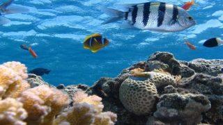 pérdida y destrucción del hábitat marino-3
