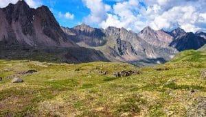 bioma de la tundra