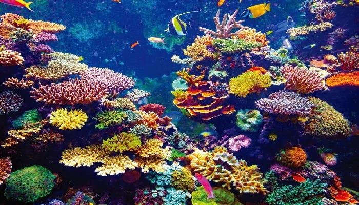 bioma del arrecife de coral