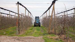 agricultura intensiva