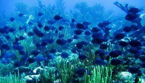 Ecosistema Marino, Qué es, Origen, Características, Importancia, Principios Y Función