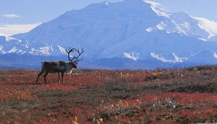 bioma de la tundra alpina