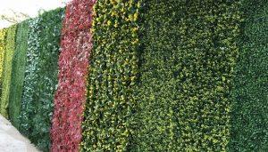 Muros Verdes, Qué Son, Origen, Características, Importancia Y Principios