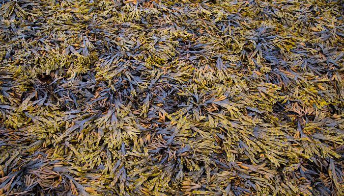 Las algas viven en todas partes