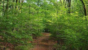 Bosques caducifolios. Qué Son, Características, Ubicación, Clima, Relieve, Flora, Fauna