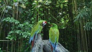 comunidad ecológica en un bosque