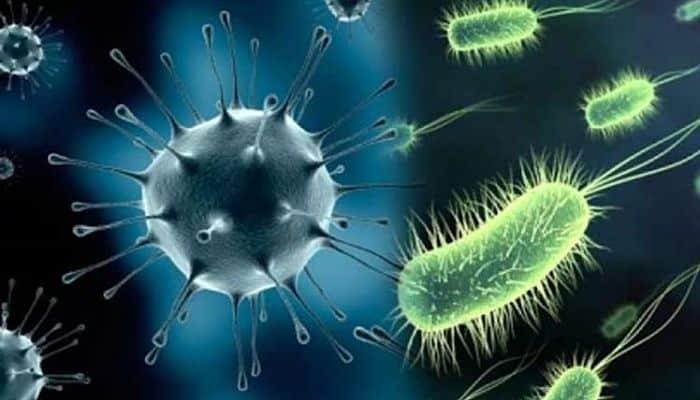 estructuras bacterianas